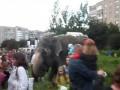 Луцк.Слоны пасутся