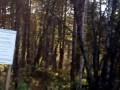 Бердские скалы- Зверобой, достопримечательность,красивейшее место Новосибирской области.Berd rock