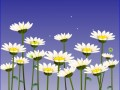 daisies00020_2