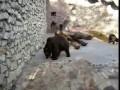 Медведь поймал голубя