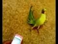 Попугай в трансе