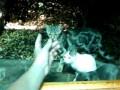Крымские кошаки