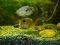 Рыбки целуються