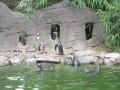 Пингвины-охотники