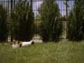 Кот в замедленном действии