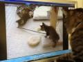 Кошка ищет своих котят