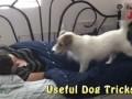 Такую собаку заведешь и считай жены уже не надо :)