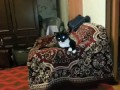 Нападение кота / attack cat