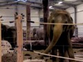 Зоопарк Мюнхена получает электричество из навоза