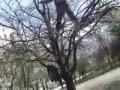 Деревенский Parkour
