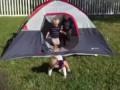 Малыши падают, выходя из палатки