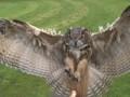 Полет совы, снятый высокоскоростной камерой