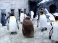 Пингвиний игнор