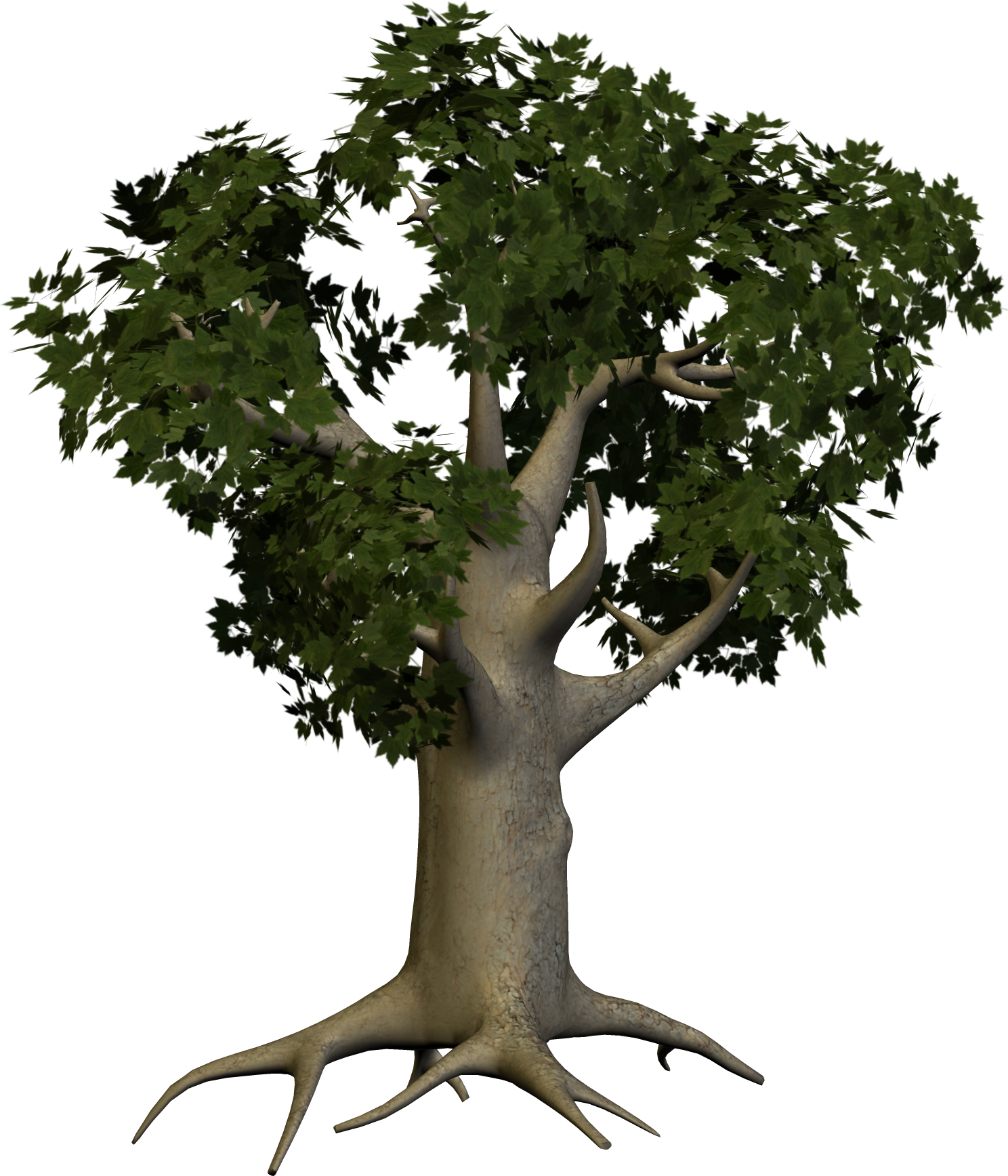 tree_PNG3480