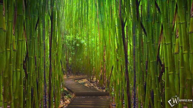 wpapers_ru_Бамбуковый-лес-Киото-Япония