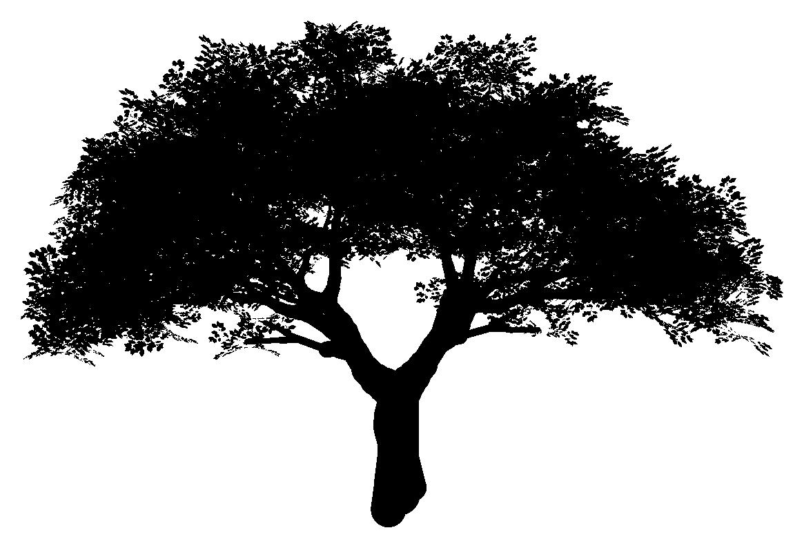 доступно черное дерево картинка мышца располагается