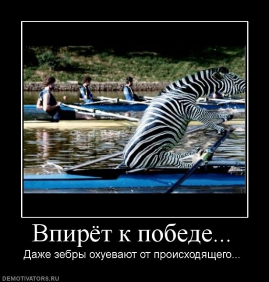 демотиватор с зеброй потрясающие