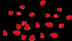 лепестки красные