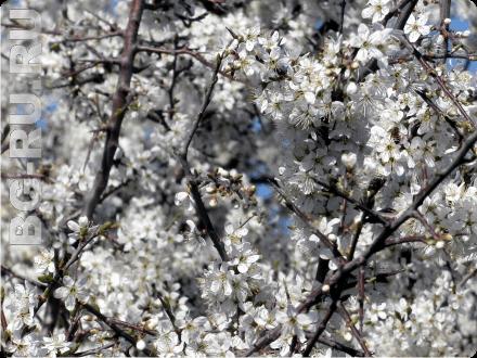 Погода в Болгарии в марте