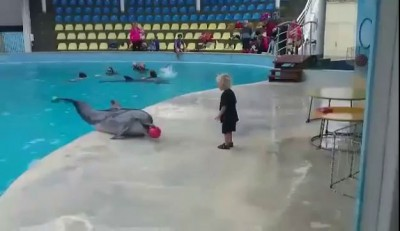 Dolphin playing with kid!