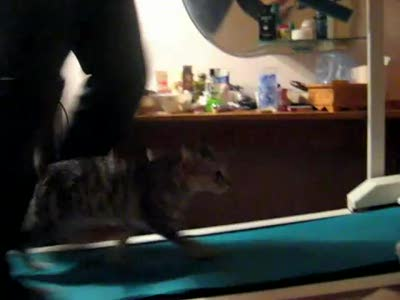 cat on a toe cam