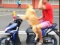 ◀ Dog Driving Scooter