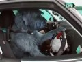 DRIVING school for DOGS in New Zealand. DOG DRIVING CAR